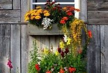 Country life ♥.•:*´¨`*:•♥