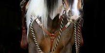 Horses ღ♞ •:*´¨`*:•♘ღ
