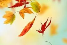 Jesiennie... / Tonacja lekko jesienna, ale jeszcze przebłyskująca...