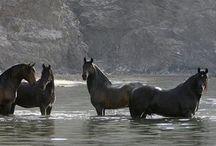 HORSES / Horse photography