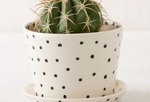 CACTUS | and succulents / Plants for the home