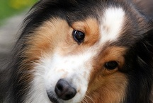 Dogs + puppies /                 Adorable  ( MAN BEST FRIEND ) ::):)        / by Joann McRoy