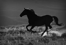 Horse___________________