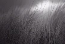 Wind___________________