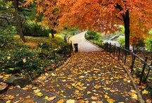 Autumn in NYC / All things great about fall in New York City!
