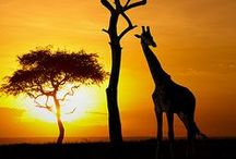 Animals***JIRAFAS