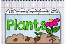K-2 Science / Worksheets and activities for science in kindergarten, 1st and 2nd grade.