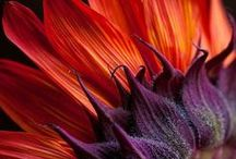 ::Favorite Flowers and Plants / by Debra (angelswhiskers) Creech