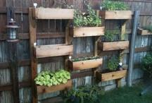 Gardening and Yard