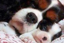 ♥  Dogs