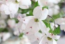 তজ  Spring তজ