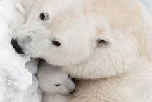 ♥ Bears