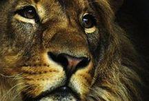Photography - Amazing animals / Animal Photography