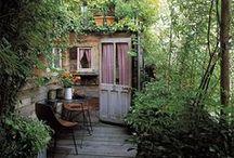 Garden/Outdoor/plants