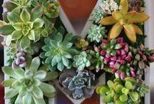 Aqua, tera, viva, paluda-rium || plants || fruit || fish || animals