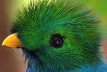 ♥ Birds