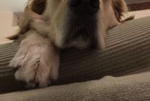Dogs !! / Boogy
