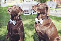 Wedding Pets / Beautiful addition to your wedding to make it even more special with your precious pets.