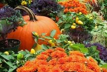 Autumn/Fall / by Jill M