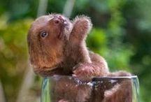 Cuteness / Basically anything cute. Mostly fluffy animals. / by Heather Lynn