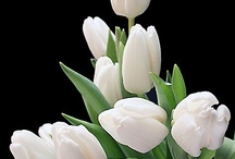 Favorite ✿ Flowers / My Favorite Flowers and Flower Arrangements