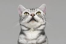 PORTRAITS / CATS