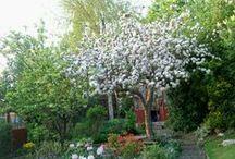 My Garden. / My Beautiful Garden