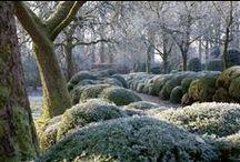 Garden / by Deborah Leloup
