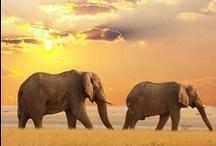 Travel ~ Africa