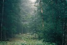 taurë / { forest }