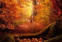 Autumn Splendor / The splendors of Autumn