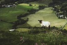 Sheep II / Sheep.