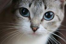 Cats Cats Cats / by Mükerrem Odabaşı
