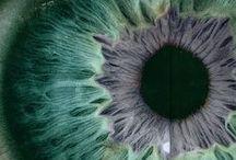 choses vues / Tableau d'inspiration mêlant de la photographie, de la peinture,