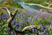 Beaches / Best beaches to visit whilst staying at the OLD SWAN INN - Pembrokeshire Holiday Cottage.  www.the-oldswaninn.co.uk