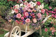 Çiçek _-_ Bahçe __/__@