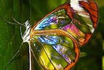 Kelebek _ Butterfly  }{ __/__@