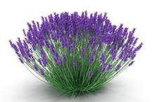 Plants 3D Models / http://www.turbosquid.com/Search/Artists/3d_molier-International