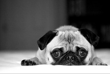 Pugs & other dogs  / by Filipa MG