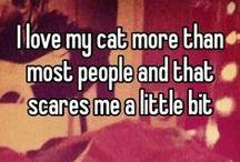 Grazy cat lady