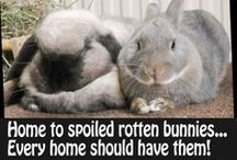 Bunny love / Pikku pahvisilppurit ❤