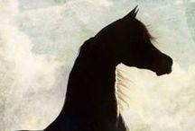 Arabian horses / no words.. love <3