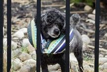 Puppy Bumpers® / Keeping dogs from escaping through fences!