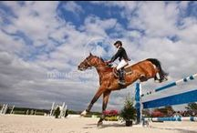 Horses / Horses in my photographs. www.manufakturawspomnien.pl