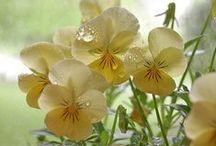 blumen / Virágok
