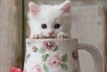 Cats / Ciciusok