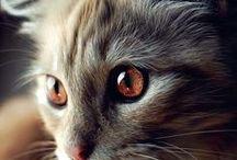 cats / Soft Kitty, Warm Kitty, Little Ball Of Fur