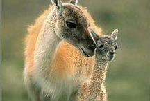 Animals  and Their Mamas- bohácsi