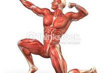 Foto per disegni di anatomia / Foto per disegni di anatomia