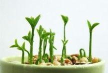 Gardening & flower ideas
